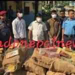 नेपाल : भारी मात्रा में पटाखा के साथ तीन भारतीय नागरिक गिरफ्तार।