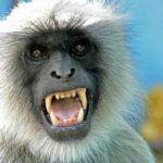 बंदरों के आतंक से ग्रामीणों में दहशत